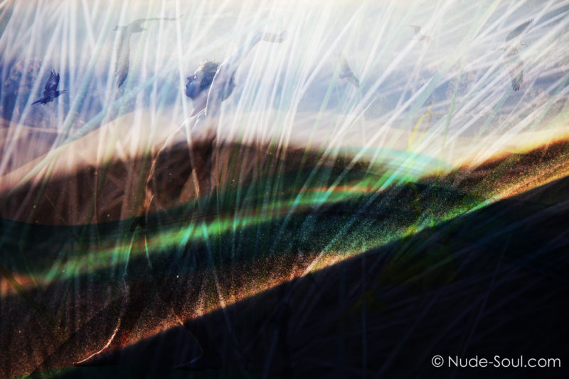 Elements of Nature: Wind
